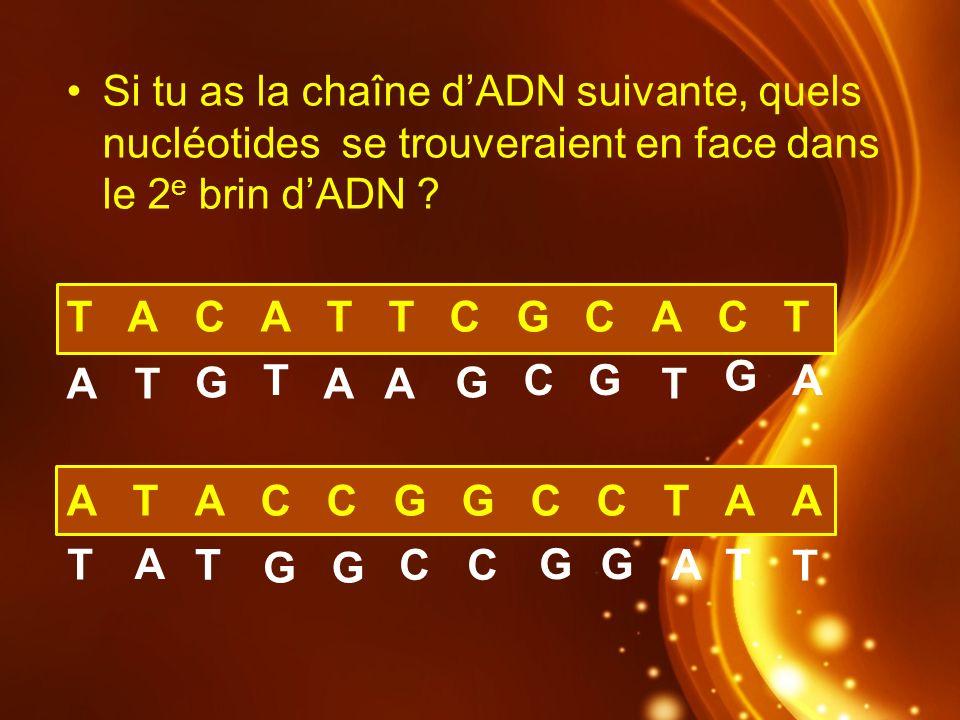 Si tu as la chaîne d'ADN suivante, quels nucléotides se trouveraient en face dans le 2e brin d'ADN
