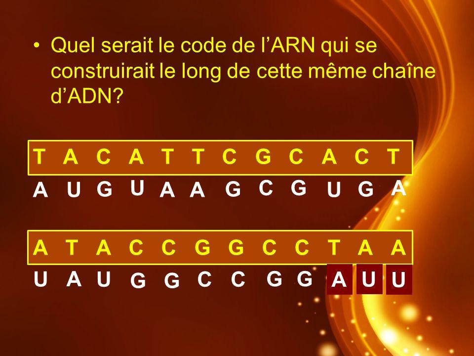 Quel serait le code de l'ARN qui se construirait le long de cette même chaîne d'ADN