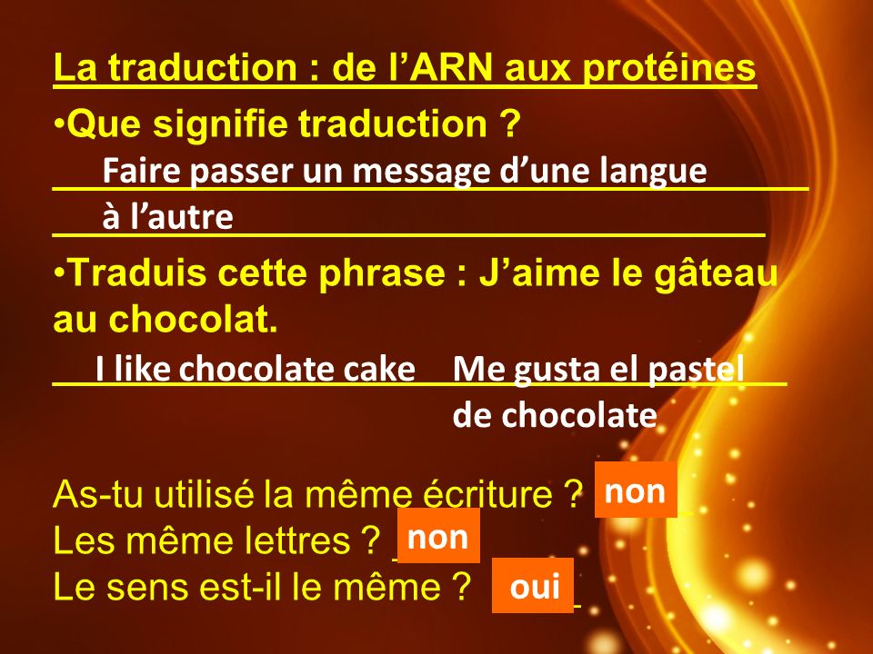 La traduction : de l'ARN aux protéines