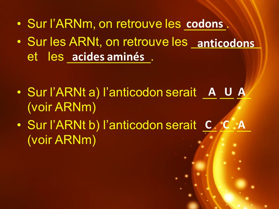 Sur l'ARNm, on retrouve les ______.