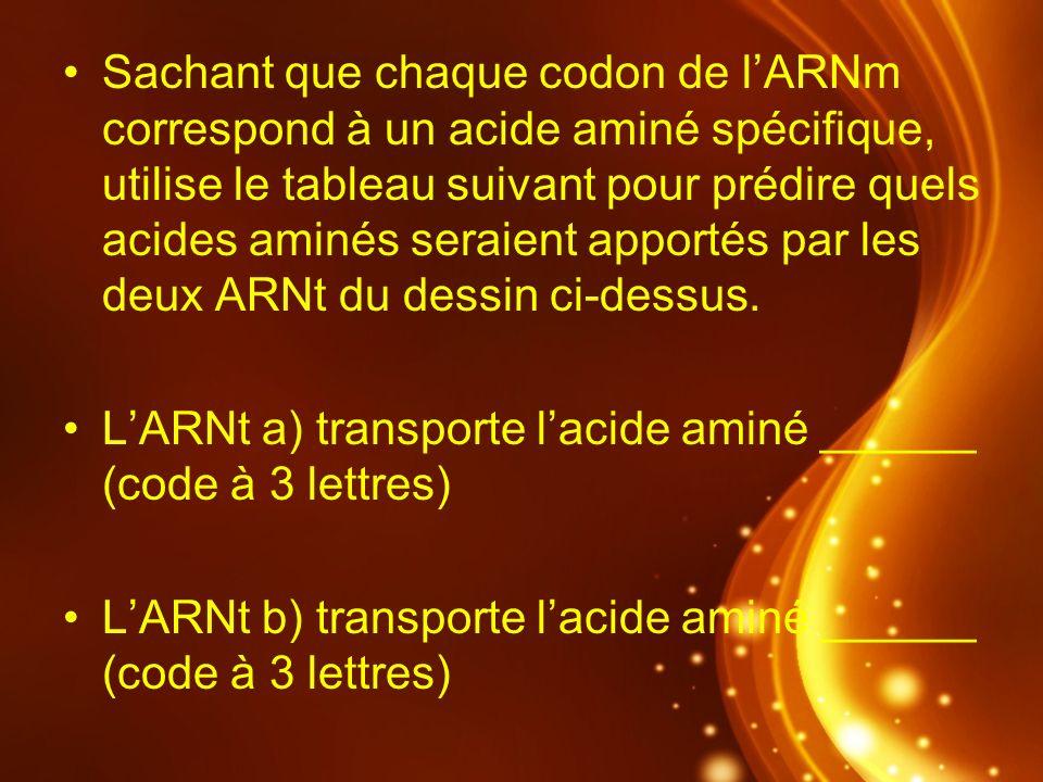 Sachant que chaque codon de l'ARNm correspond à un acide aminé spécifique, utilise le tableau suivant pour prédire quels acides aminés seraient apportés par les deux ARNt du dessin ci-dessus.