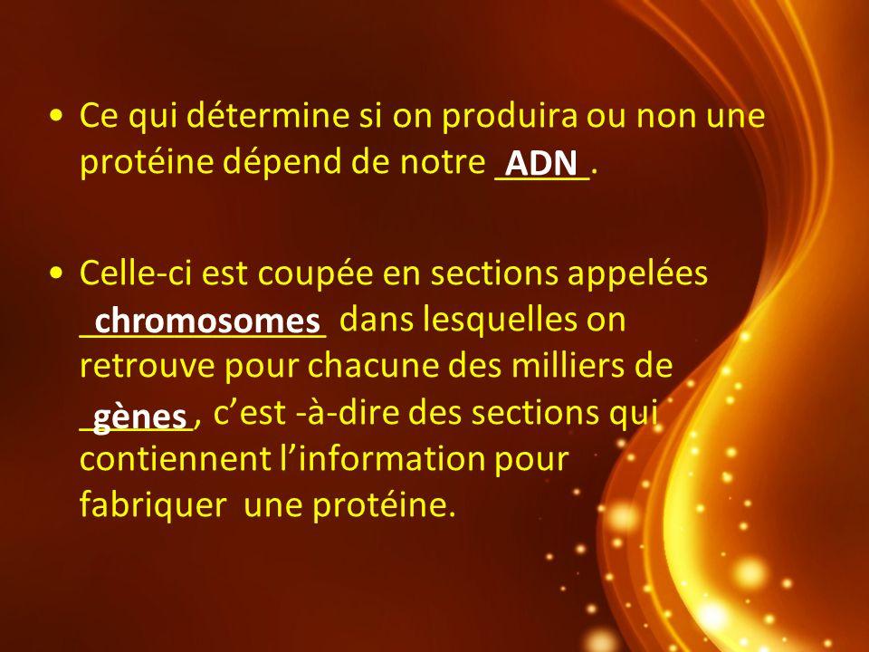 Ce qui détermine si on produira ou non une protéine dépend de notre _____.