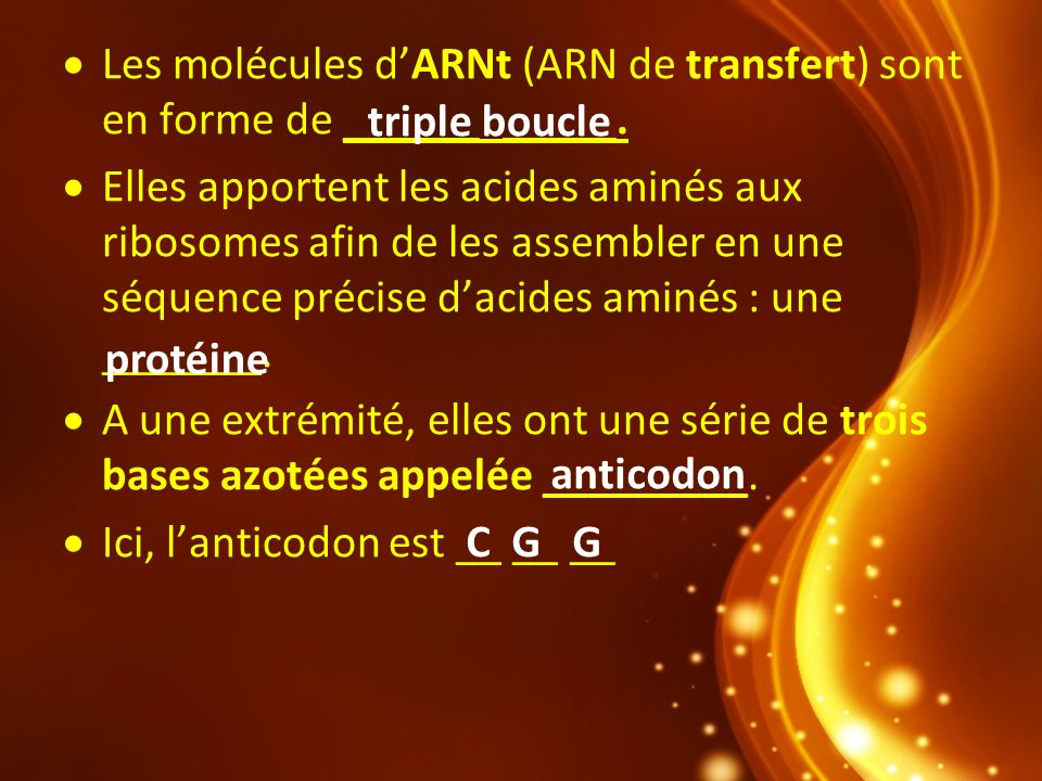 Les molécules d'ARNt (ARN de transfert) sont en forme de ______ _____.