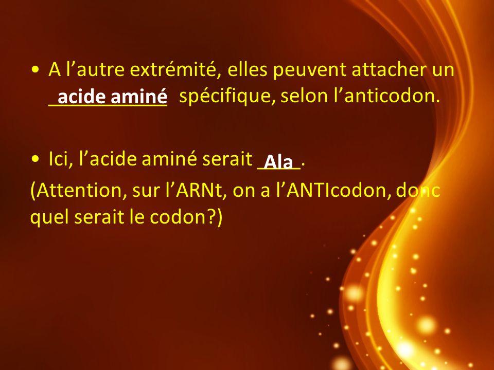 A l'autre extrémité, elles peuvent attacher un ___________ spécifique, selon l'anticodon.
