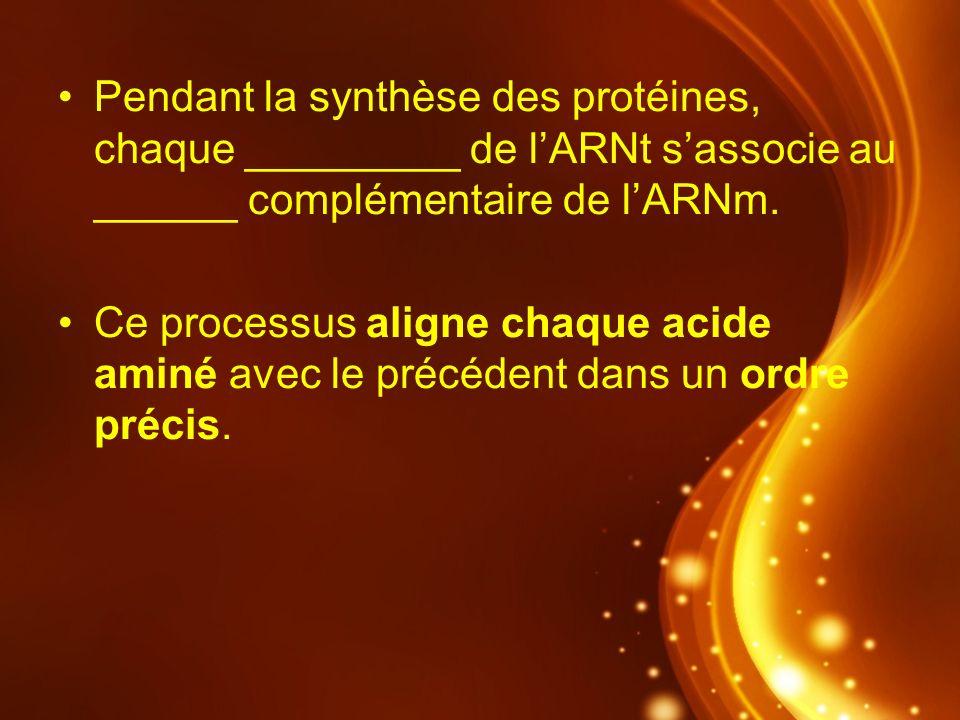 Pendant la synthèse des protéines, chaque _________ de l'ARNt s'associe au ______ complémentaire de l'ARNm.