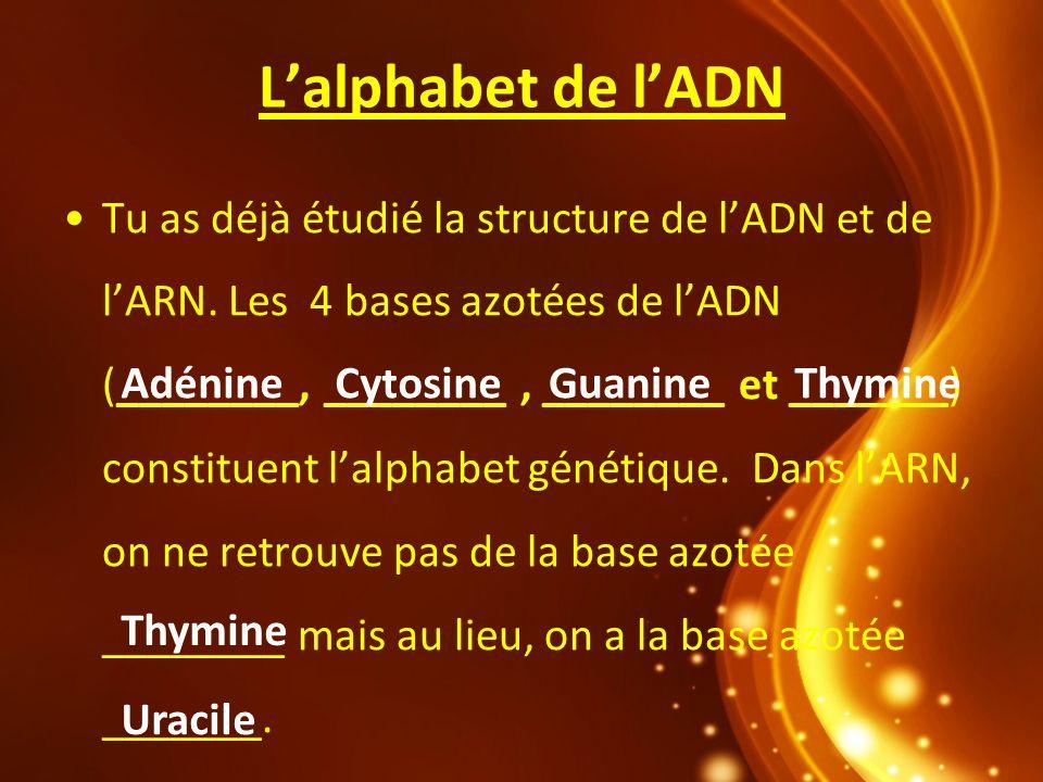 L'alphabet de l'ADN