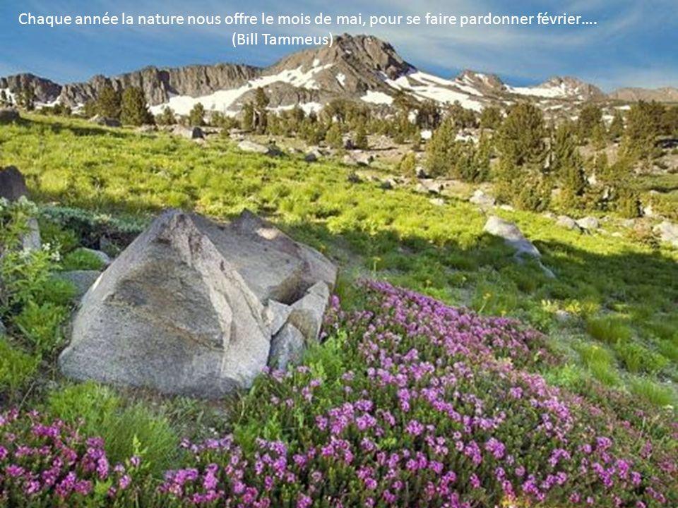 Chaque année la nature nous offre le mois de mai, pour se faire pardonner février….