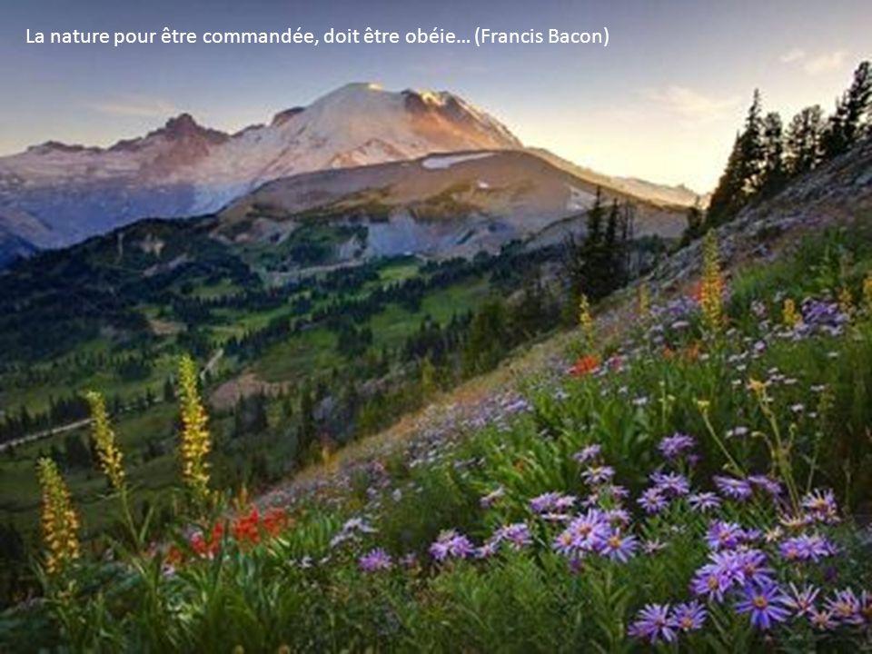 La nature pour être commandée, doit être obéie… (Francis Bacon)