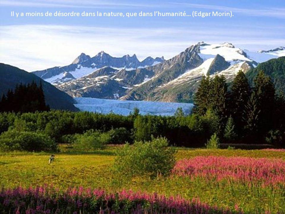 Il y a moins de désordre dans la nature, que dans l'humanité… (Edgar Morin).