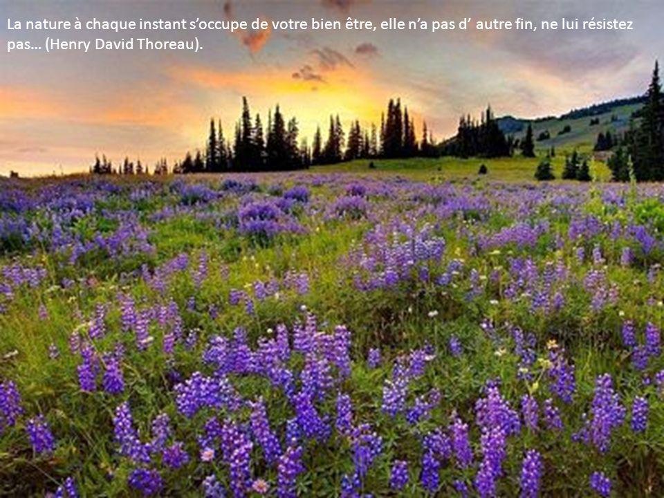 La nature à chaque instant s'occupe de votre bien être, elle n'a pas d' autre fin, ne lui résistez pas… (Henry David Thoreau).