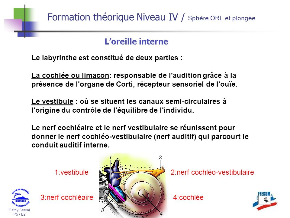 Formation théorique Niveau IV / Sphère ORL et plongée
