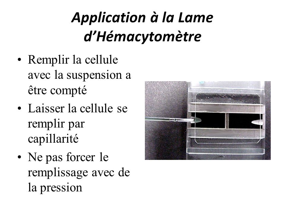 Application à la Lame d'Hémacytomètre
