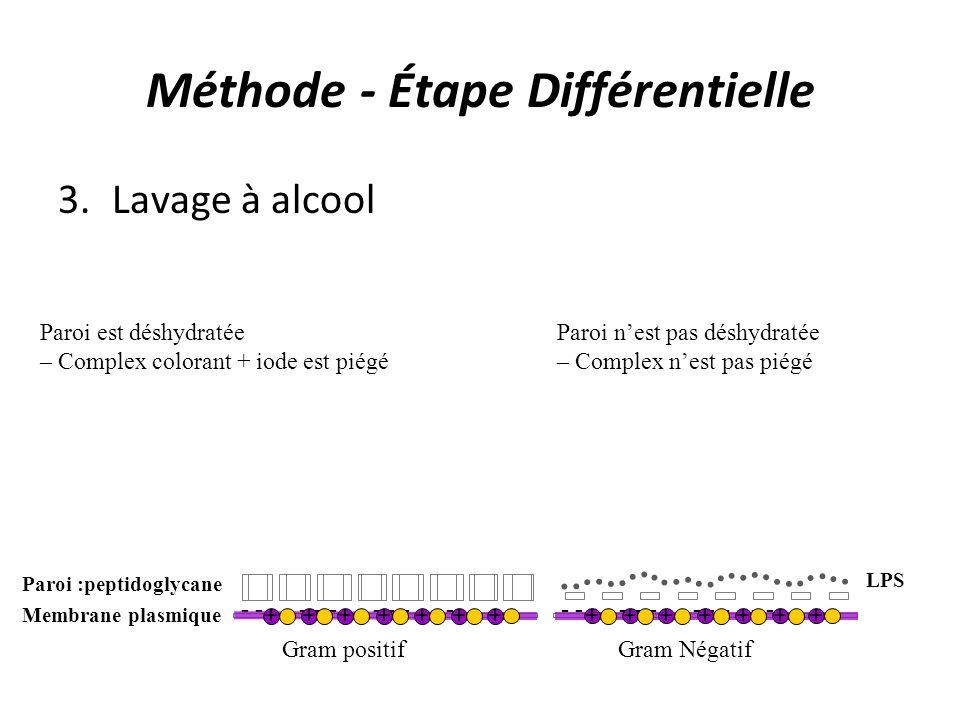Méthode - Étape Différentielle