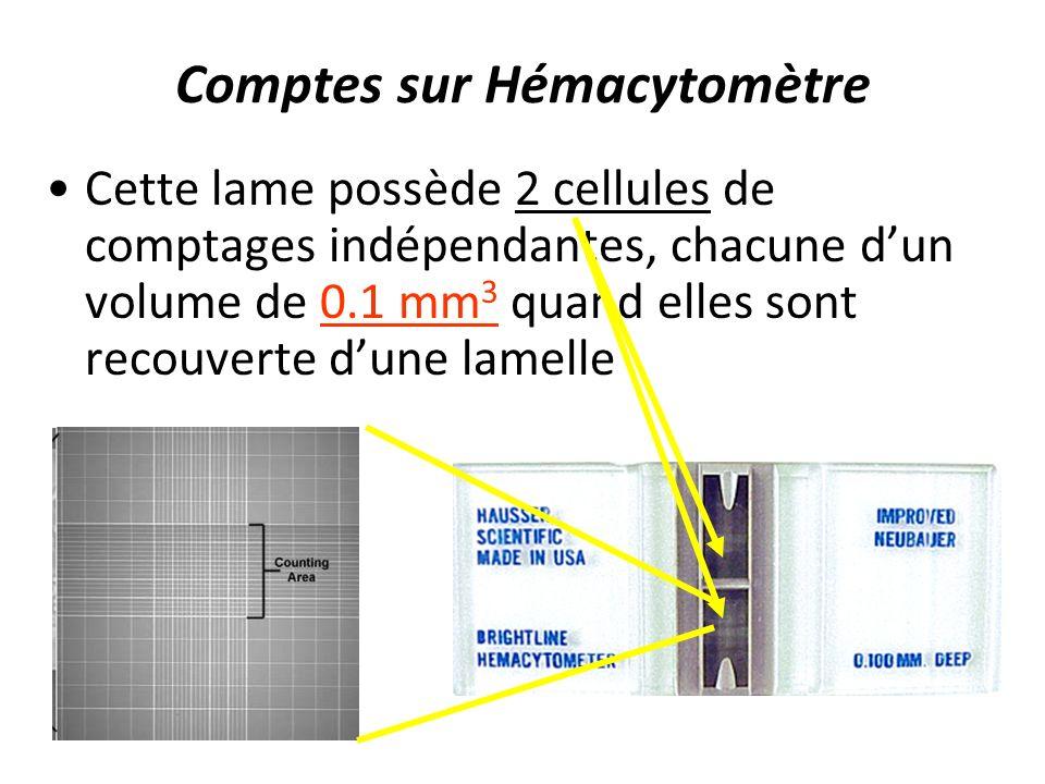 Comptes sur Hémacytomètre