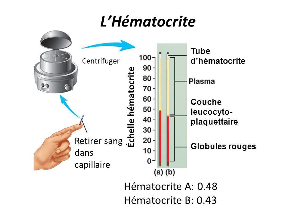 L'Hématocrite Hématocrite A: 0.48 Hématocrite B: 0.43