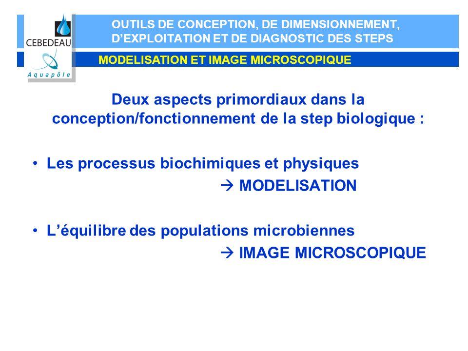 Les processus biochimiques et physiques  MODELISATION