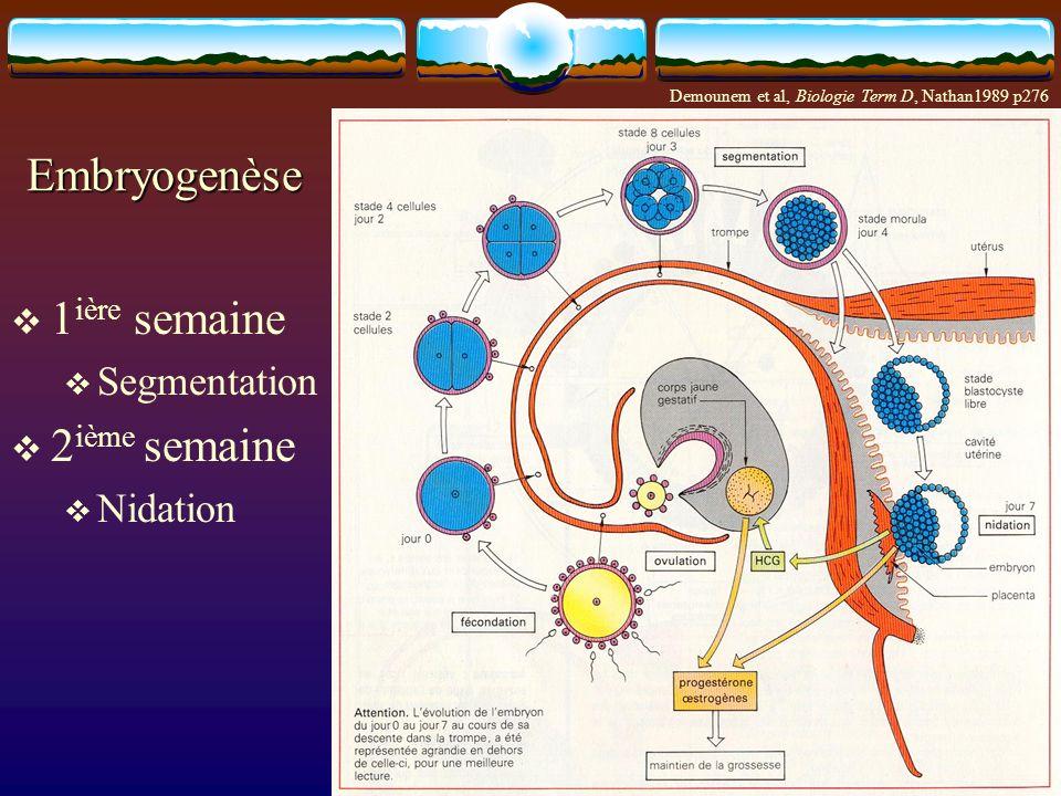 Embryogenèse 1ière semaine 2ième semaine Segmentation Nidation