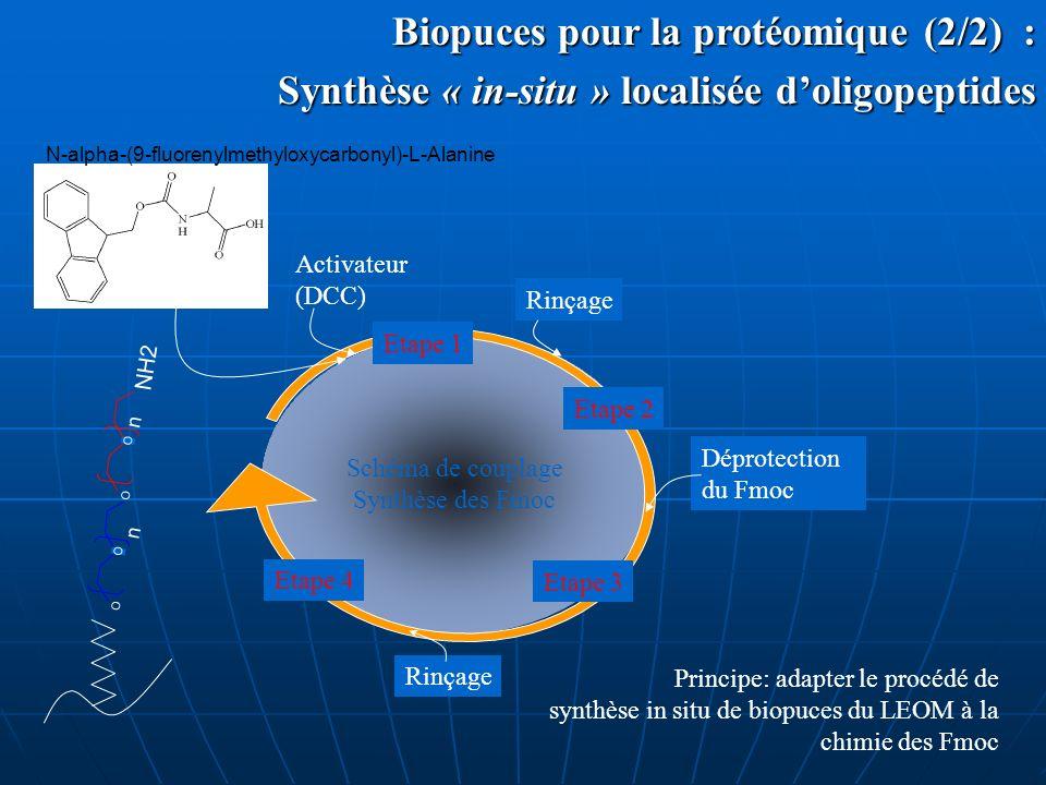 Synthèse « in-situ » localisée d'oligopeptides
