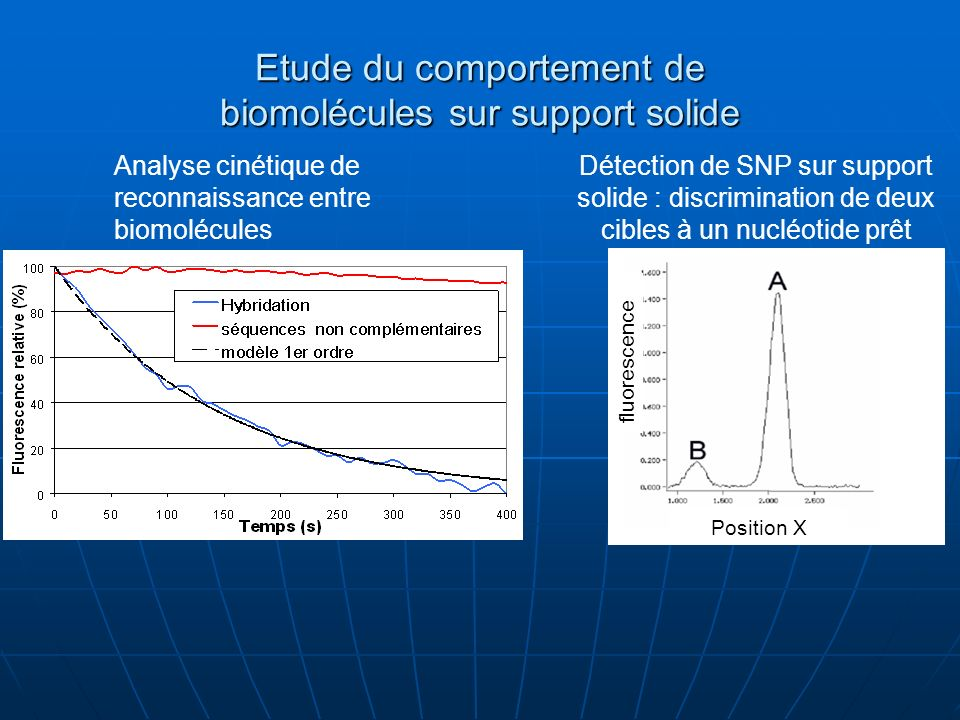 Etude du comportement de biomolécules sur support solide