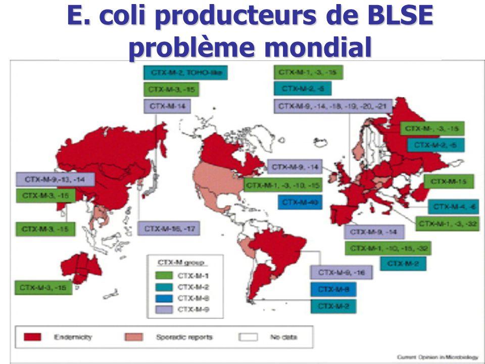 E. coli producteurs de BLSE problème mondial