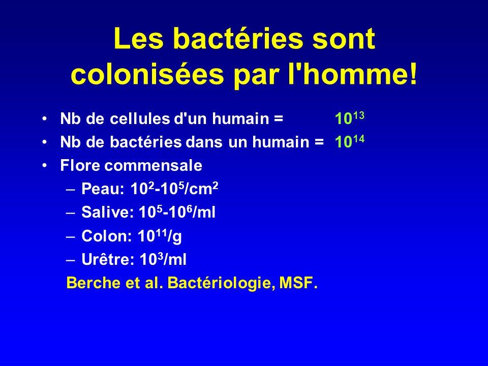 Les bactéries sont colonisées par l homme!