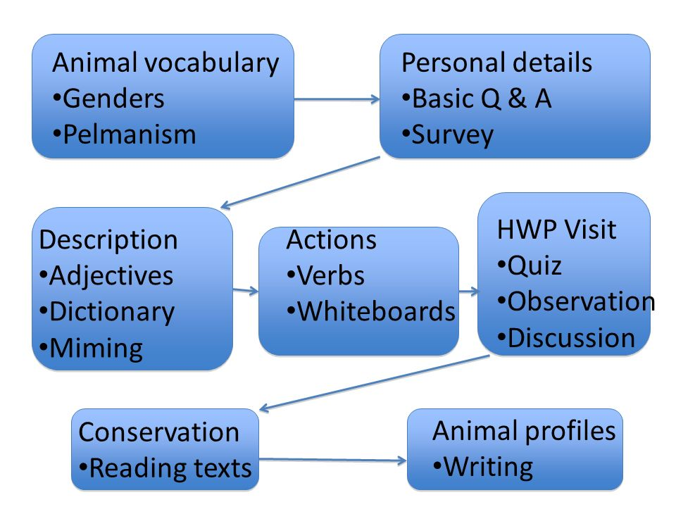 Animal vocabulary Genders Pelmanism Personal details Basic Q & A
