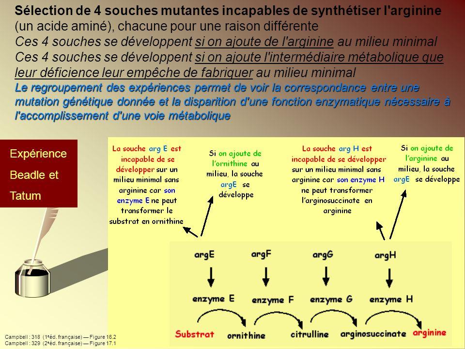 Sélection de 4 souches mutantes incapables de synthétiser l arginine (un acide aminé), chacune pour une raison différente