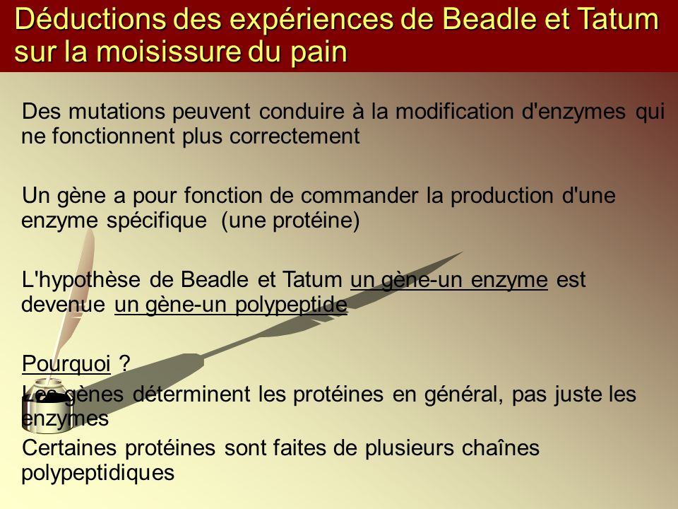 Déductions des expériences de Beadle et Tatum sur la moisissure du pain