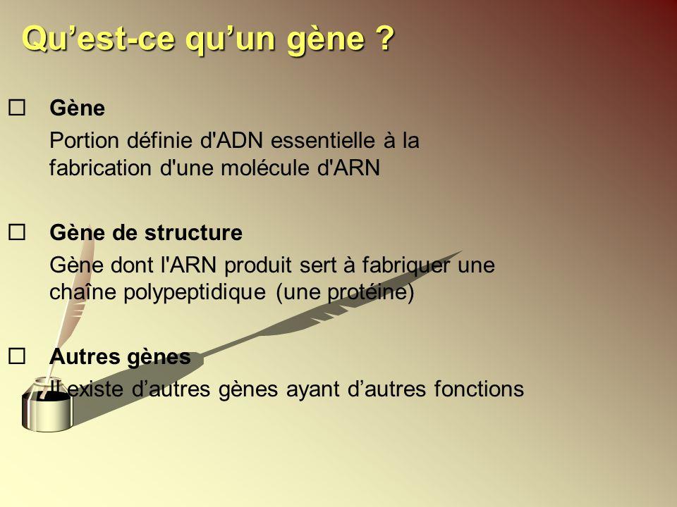 Qu'est-ce qu'un gène Gène