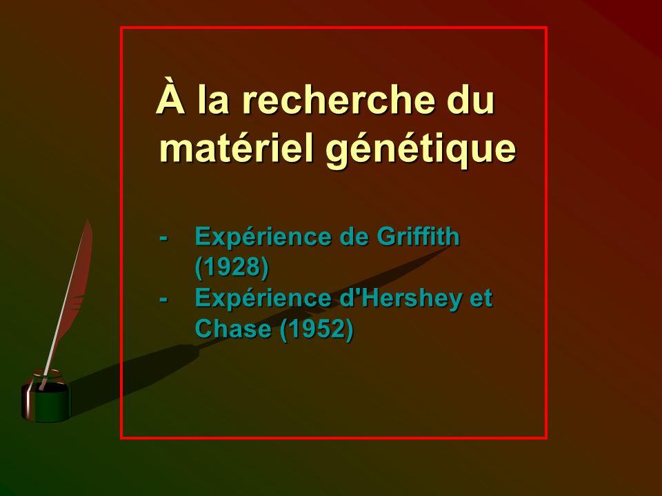À la recherche du matériel génétique -. Expérience de Griffith