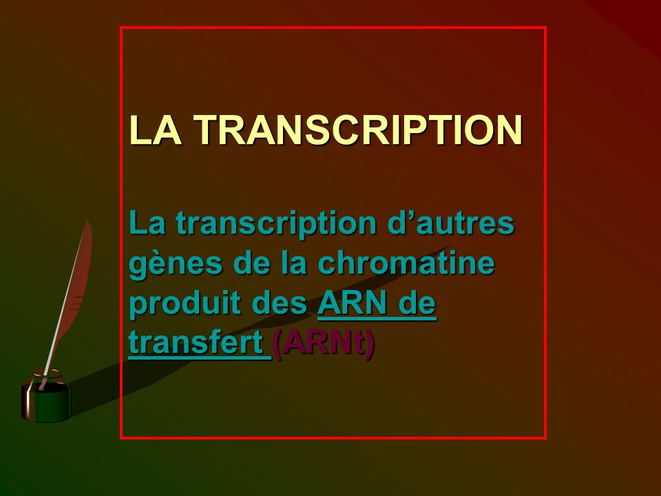 LA TRANSCRIPTION La transcription d'autres gènes de la chromatine produit des ARN de transfert (ARNt)