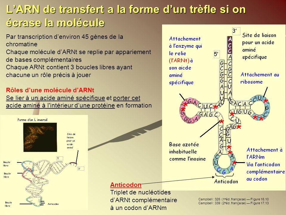 L'ARN de transfert a la forme d'un trèfle si on écrase la molécule