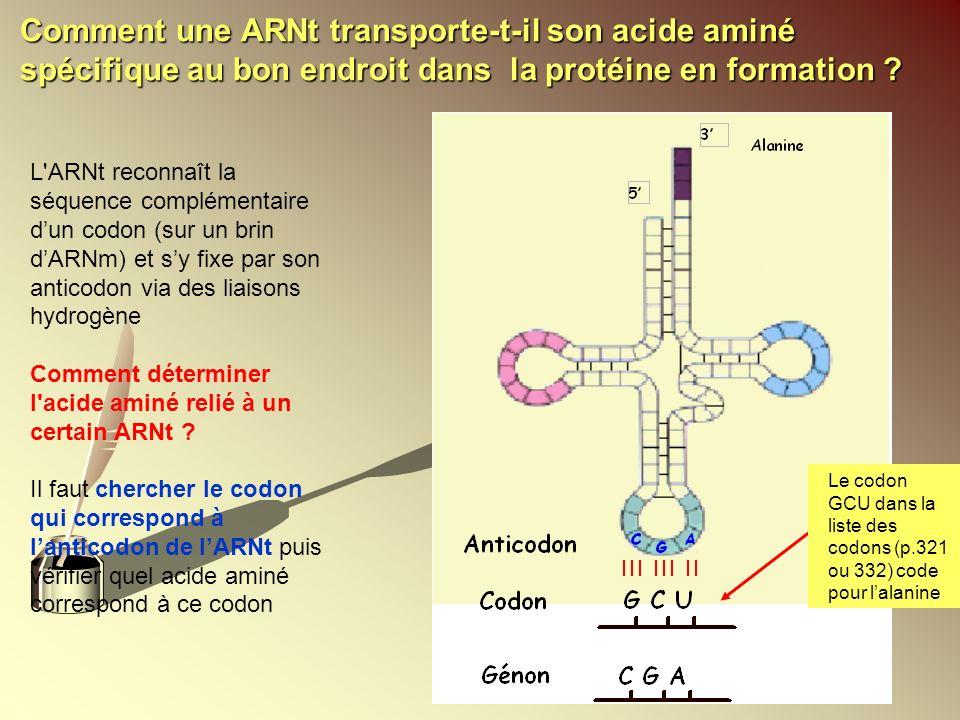 Comment une ARNt transporte-t-il son acide aminé spécifique au bon endroit dans la protéine en formation