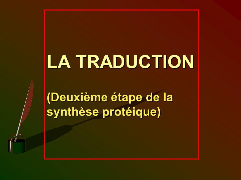 LA TRADUCTION (Deuxième étape de la synthèse protéique)