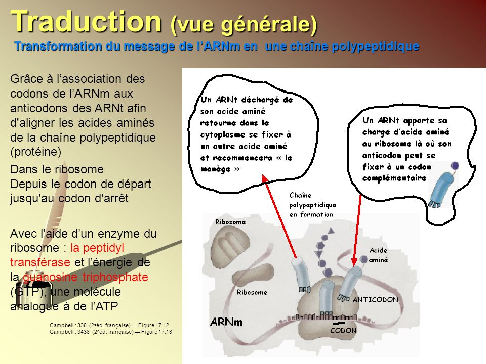 Traduction (vue générale)