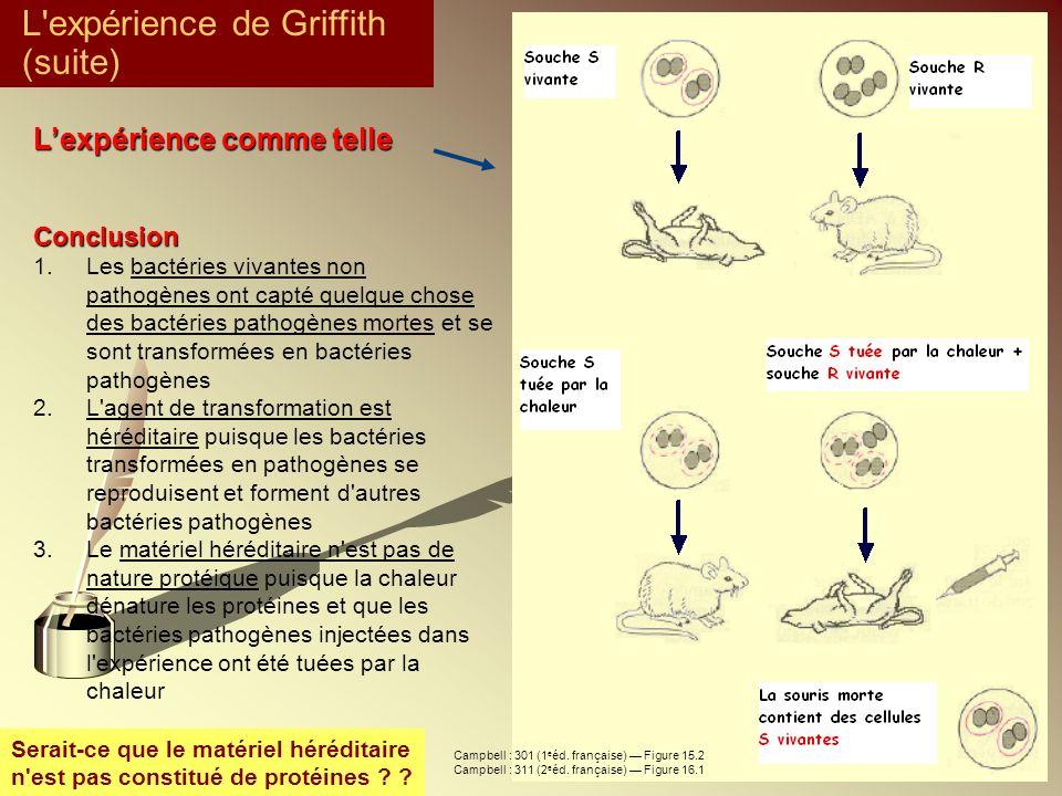 L expérience de Griffith (suite)
