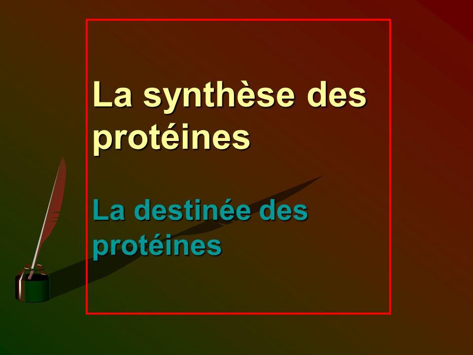 La synthèse des protéines La destinée des protéines
