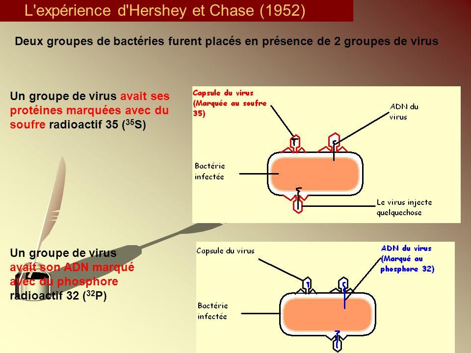 L expérience d Hershey et Chase (1952)