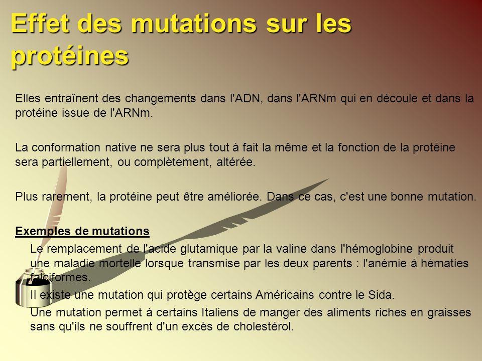 Effet des mutations sur les protéines