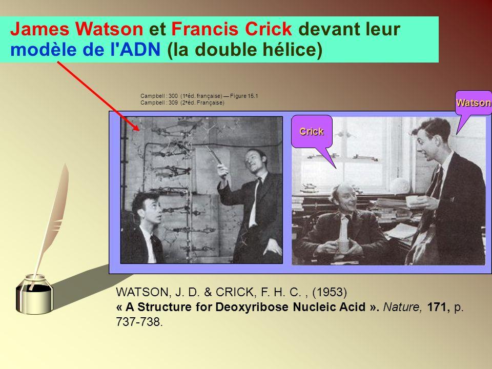 James Watson et Francis Crick devant leur modèle de l ADN (la double hélice)