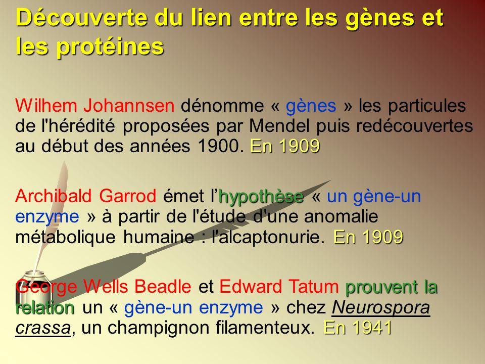 Découverte du lien entre les gènes et les protéines
