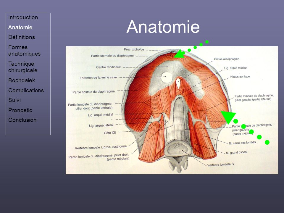 Anatomie Introduction Anatomie Définitions Formes anatomiques