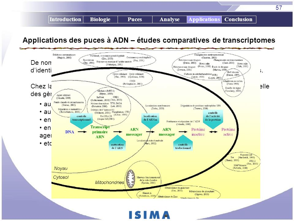 Applications des puces à ADN – études comparatives de transcriptomes