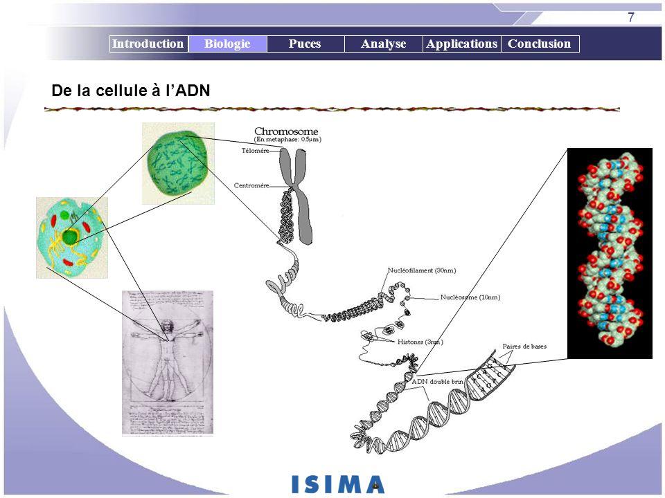 Biologie De la cellule à l'ADN