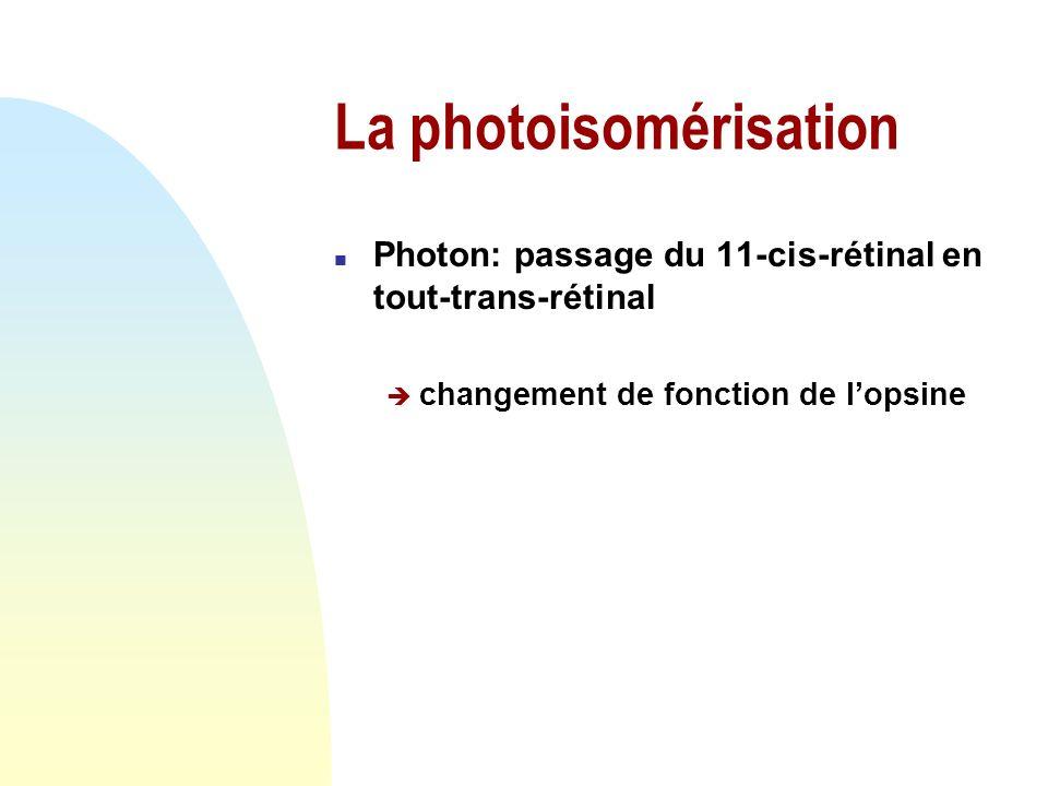 La photoisomérisation