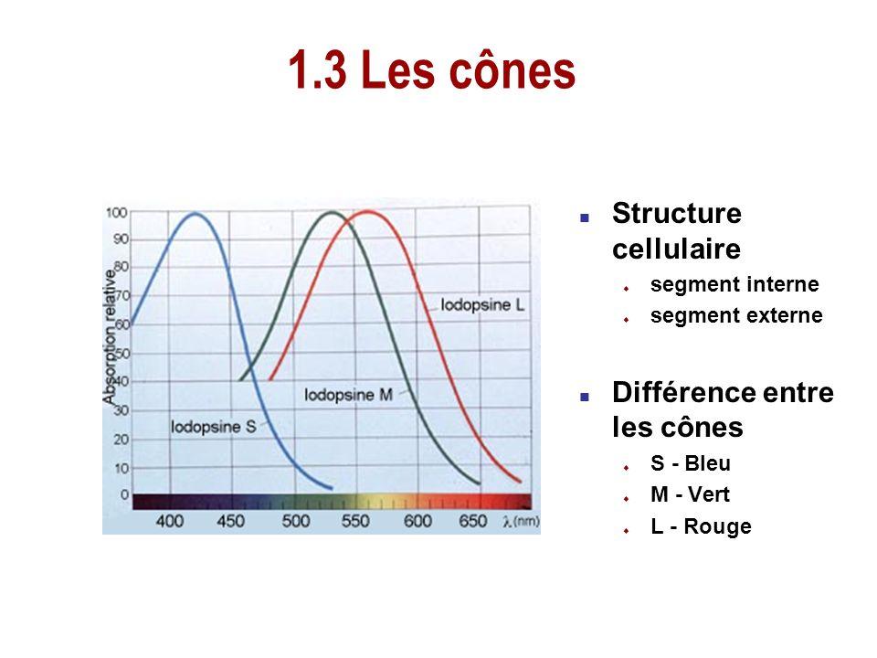 1.3 Les cônes Structure cellulaire Différence entre les cônes