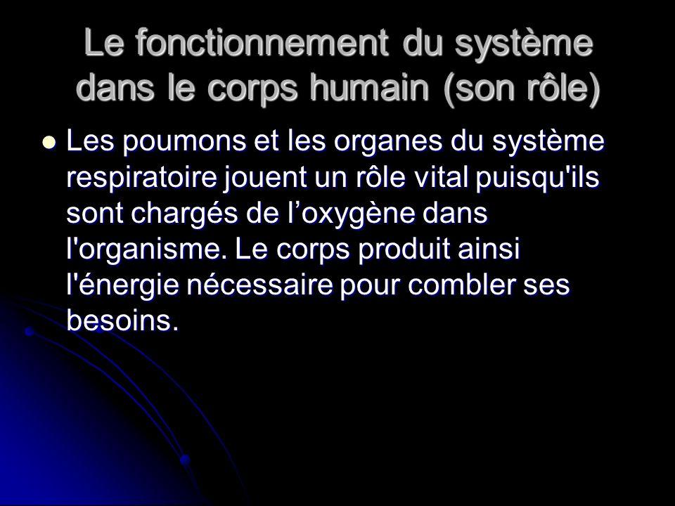 Le fonctionnement du système dans le corps humain (son rôle)