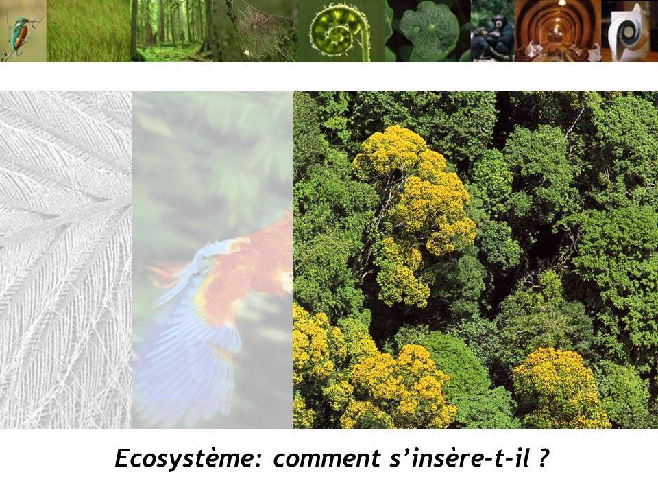 Ecosystème: comment s'insère-t-il