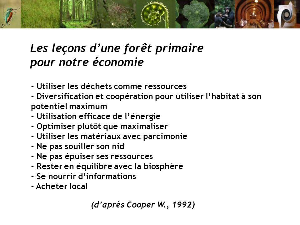 Les leçons d'une forêt primaire pour notre économie
