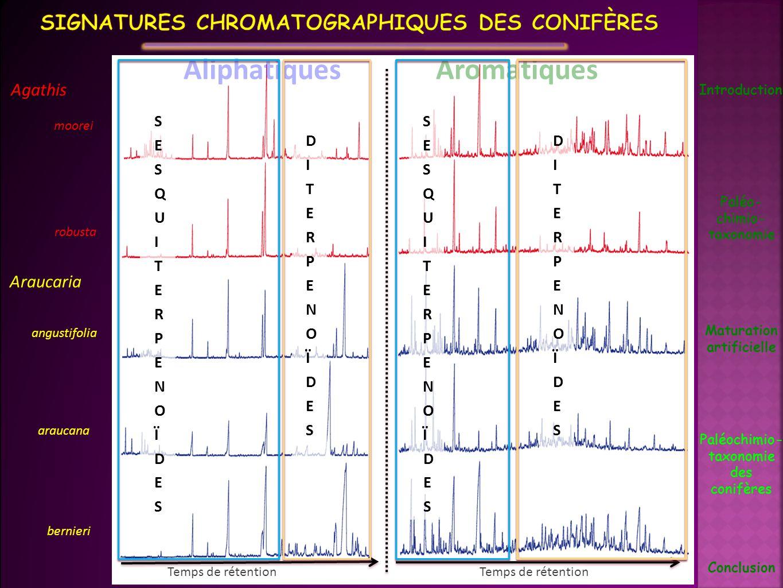 Signatures chromatographiques des Conifères
